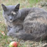 Katze im Gasthof Schneider
